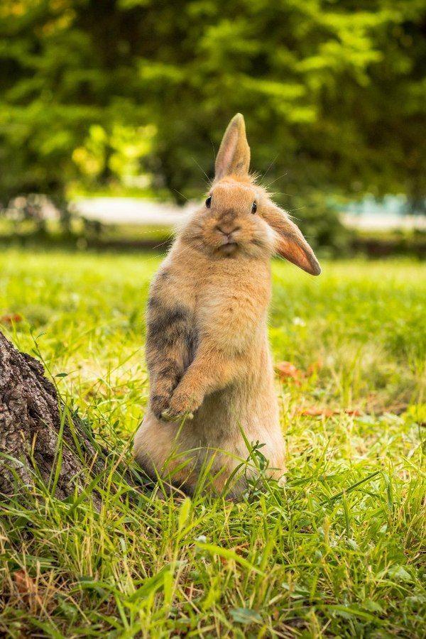 Картинки про кроликов смешных