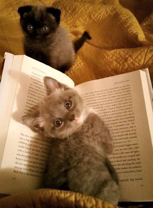 O mais fofo marcador de página da vida! - The cutest bookmark