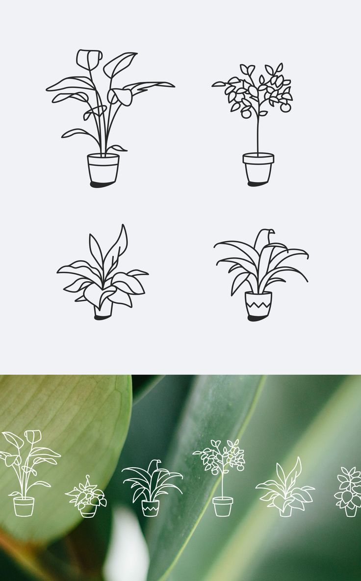 Plant Icons / Personal Project on Behance                                                                                                                                                                                 More