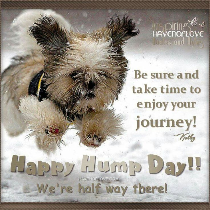 Happy Hump Day- I hope you enjoy my boards, and thanks for following me. :-) ~B.