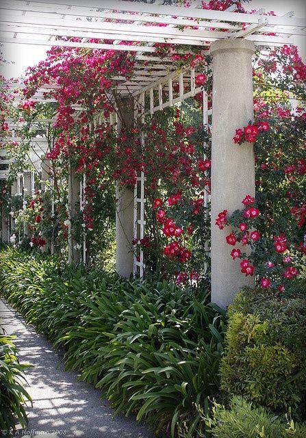 Rose Trellis Landscape Backyard Sideyard Amp Garden