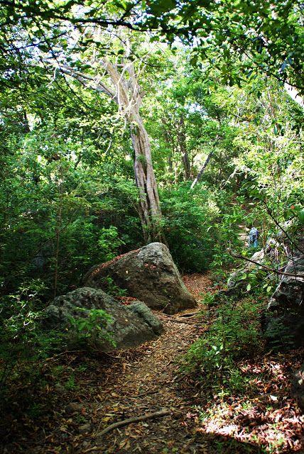 Safari adventure in the Kumala National Park, Sri Lanka   Let's get lost!