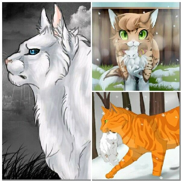 Warriors Book Series Games: 170 Best Images About Warrior Cats On Pinterest