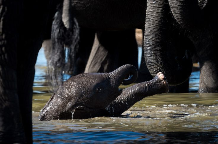 Elephant abound in Hwange National Park #Linkwasha