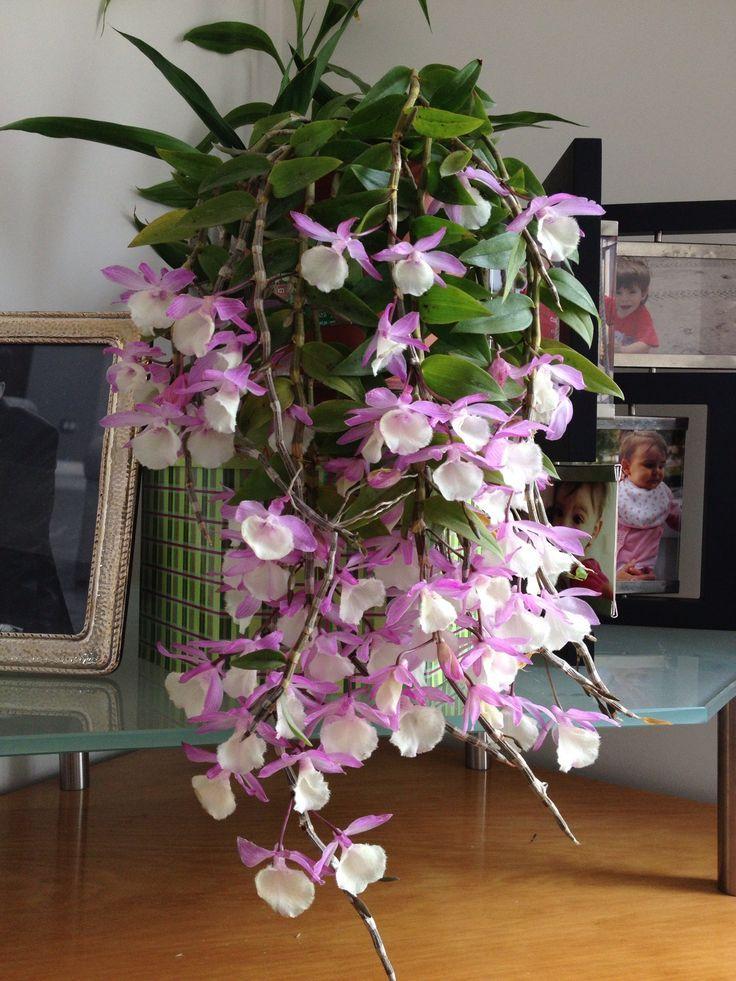 Orquídeas en hogar