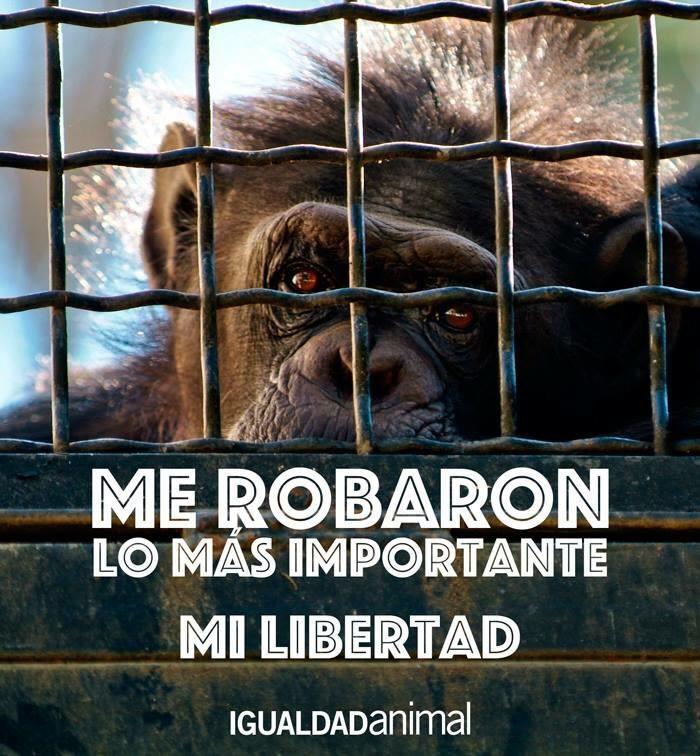 La libertad es lo más importante que poseemos todos los seres.Si nos la quitan nos quitan la vida.Circos sin animales