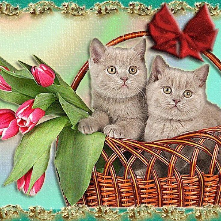 Котенок с праздником