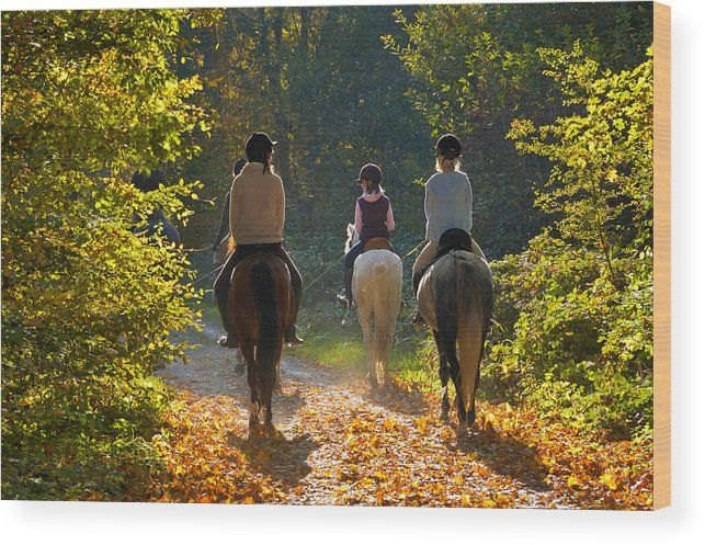 "Horse riding Wood Print: Beautiful sunny day in fall - riders with their horses on a forest path in the woods. The image gets printed directly onto a sheet of 3/4"" thick maple wood. Wood prints are extremely durable and add a rustic feel to any image. Click through and enjoy the texture and depth of this artwork in your home. Matthias Hauser - Art for your Home Decor and Interior Design."