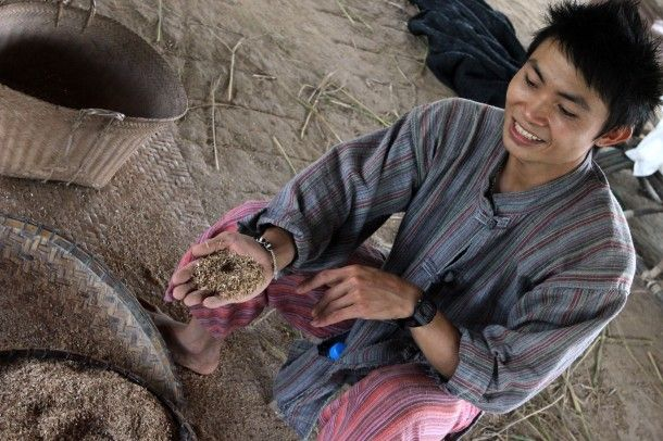 Learning about threshing rice in Laos