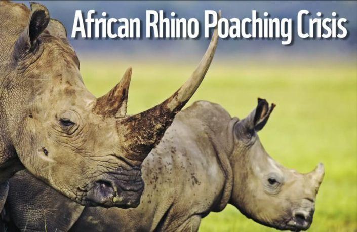 African Animal Crisis?