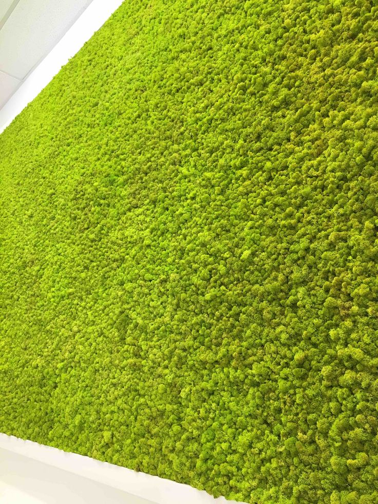 Moss wall by Ryan McQuerry at Outside In