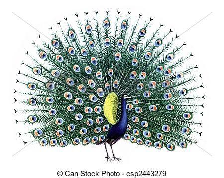 Disegni da colorare pavone cerca con google pavone - Dessin de paon ...