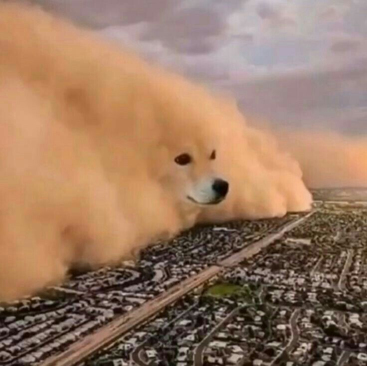 Dog Destroying City Meme Template In 2020 Animal Photography Dogs Animals