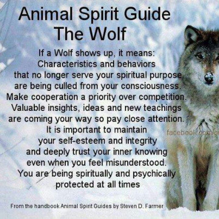 Wolf spirit guide: I knew she's been with me my entire life for a reason. My heart has always known this.