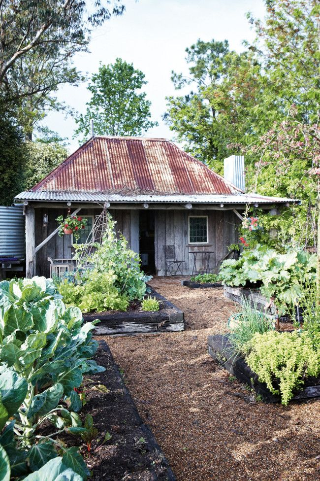 An old cottage in Australia with vertical board walls and tin roof                                                                                                                                                      More