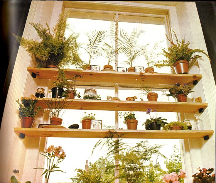 Home Design Stylish Three Tier Oak Unfinished Window Shelves With Lovely Plants Flower Decors As Inspiring Women Kitchen Designs Ideas