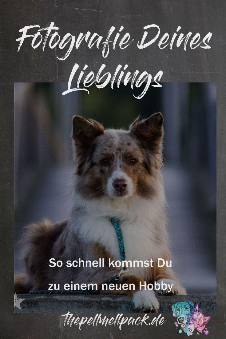 Hundefotografie – So gelingt der Sprung vom Handy zur Spiegelreflexkamera   #hundefotografie   #tierfotografie   #fotografie   Fotografie für Anfänger   thepellmellpack.de