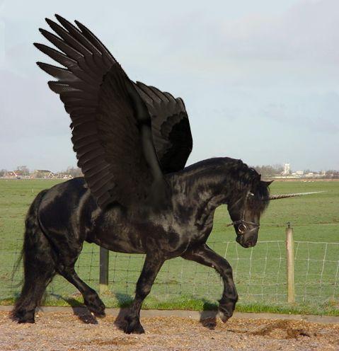 Imágenes de Unicornios REALES