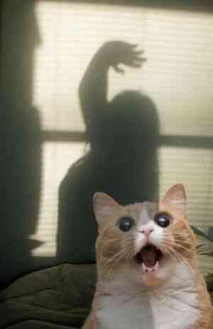 面白系限定!Twitterで人気になった猫画像 30選 - ペット日和