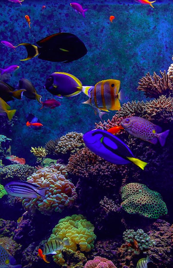 A reef of colored beauty