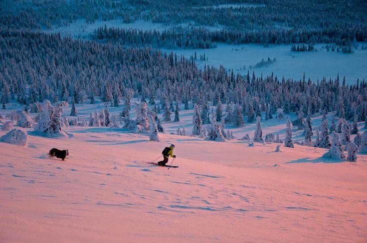 Skier in Aakenustunturi Fells in Lapland, Finland
