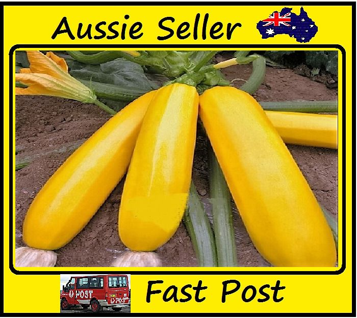 Banana Melon Seeds Golden Rich Flesh Healthy Eating 25 Seed Lots Home Garden
