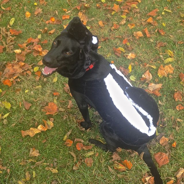 7 best Molly costumes images on Pinterest | Animals, Costume ideas ...