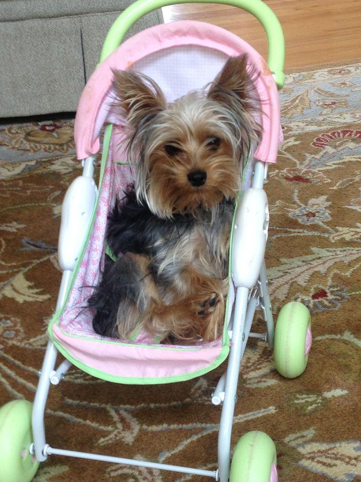12 Best Ideas About Dog Stroller On Pinterest Halloween