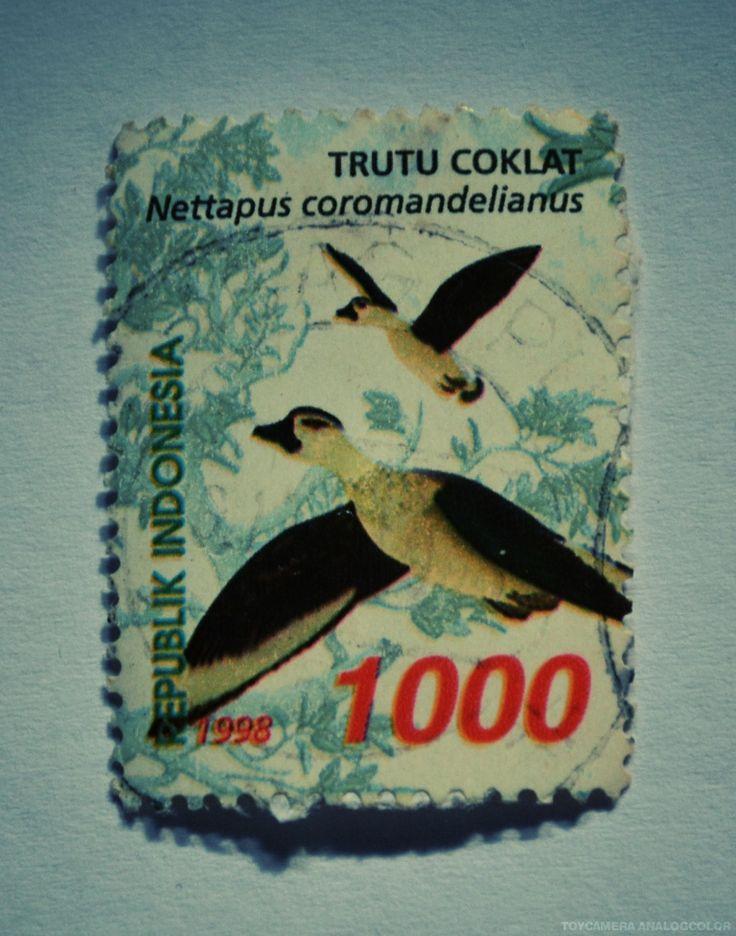 perangko Trutu Coklat tahun 1998 (Rp 1000)