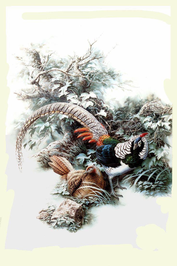 Картинки по запросу антикварные рисунки птиц