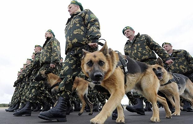 Belarusian-Russian military exercise. In pictures: Animals at war - Telegraph Both dogs looking at the camera look like the are about to enter attack mode.......run !!!!