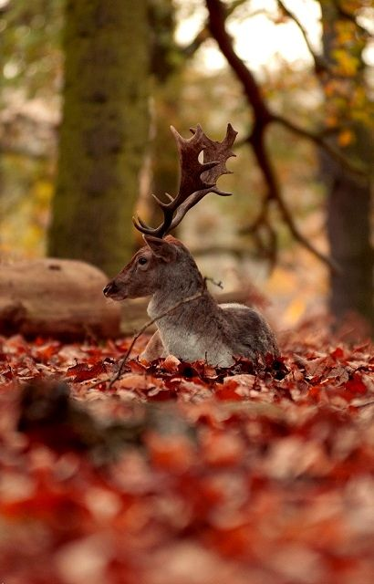 Autumn ~ in the forest ~ contemplating.. | by Jules.T