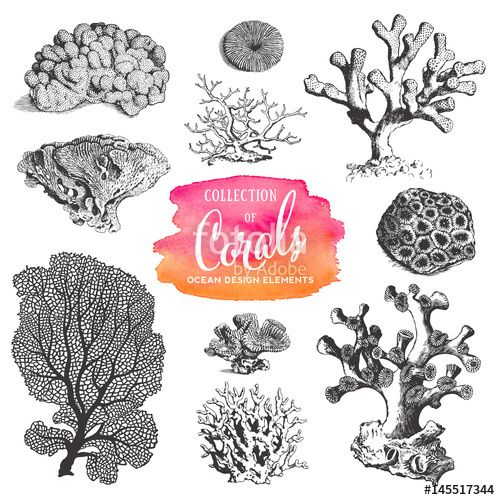 Best 25+ Coral Drawing Ideas On Pinterest
