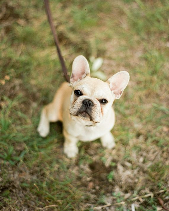 The couple's young pup, a French bulldog named Muki, joined in on the fun.