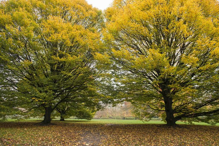 #Autumn #Trees in #London. If you need any help around your property Melchior Gray is a London-based property maintenance company. We specialise in responsive maintenance, painting/decorating & small building projects. Call our team today on 020 7731 2100 www.melchiorgray.co.uk Photography by ©DavidJensen