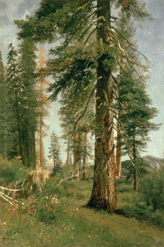 Albert Bierstadt-California Redwoods (oil on paper)