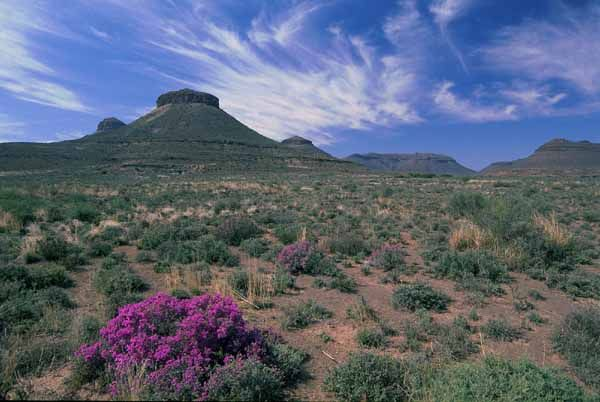 The Three Sisters, with flowering Karoo fields, Northern Cape Province