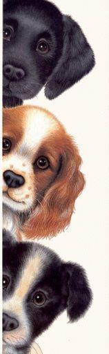 hermoso perritos