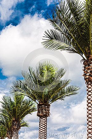 Palm trees over cloudy sky in tropical resort.