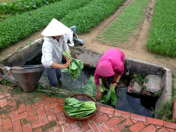 Reaping what was sown.  Lives changed forever - for the better. #vietnamschooltours #servicework #vietnam