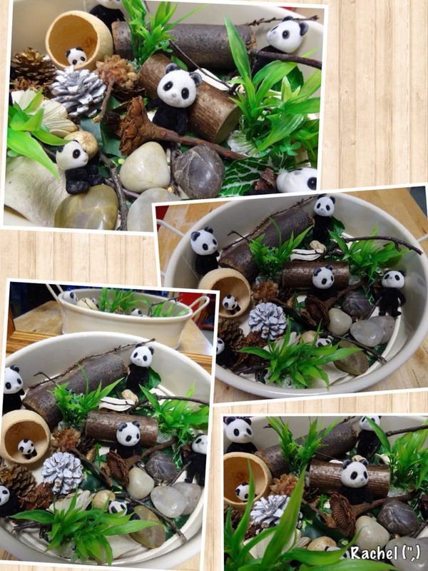 "Panda World from Rachel ("",)"