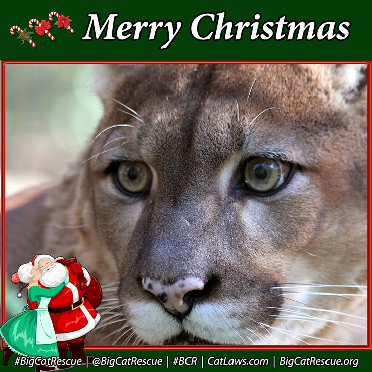 Who likes to pass along holiday greetings online?Sign up for this month's Free Newsletter to get more like this.http://BigCatRescue/Join