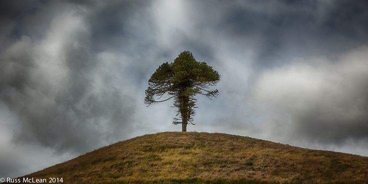 """Stand Alone"" - Taranaki, North Island, NZ."