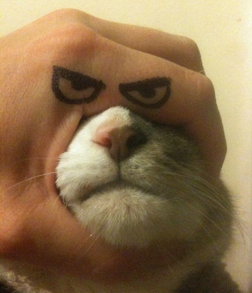 'How to make your own Grumpy Cat.' @Ashley Jones get Brody to do this to Salem.... take pictures of her kicking is ass after too! Bahaha