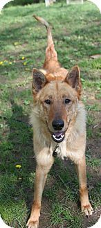 Check out Leon's profile on AllPaws.com and help him get adopted! Leon is an adorable Dog that needs a new home. https://www.allpaws.com/adopt-a-dog/belgian-shepherd-dog-sheepdog-mix-belgian-shepherd-laekenois/1531651?social_ref=pinterest