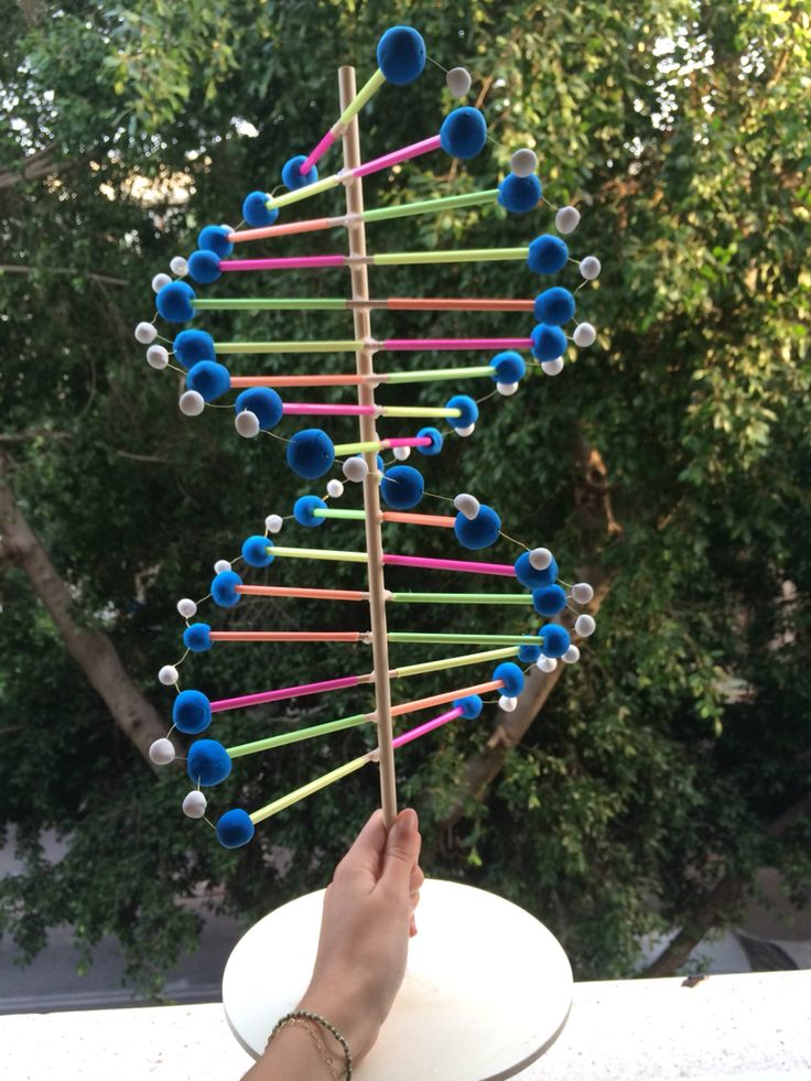 DNA model - made of sticks, straws, and clay.