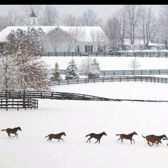 Kentucky horse country - Absolutely Beautiful !!