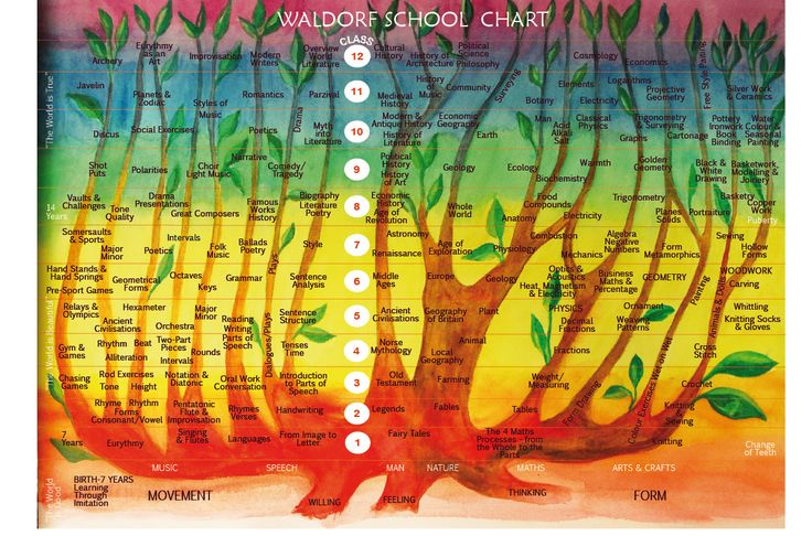 l: Curriculum Charts, Waldorf Schools, Waldorf Education, Hall Schools, Steiner Waldorf, Education Charts, Waldorf Curriculum, Charts Steiner, Michael Hall