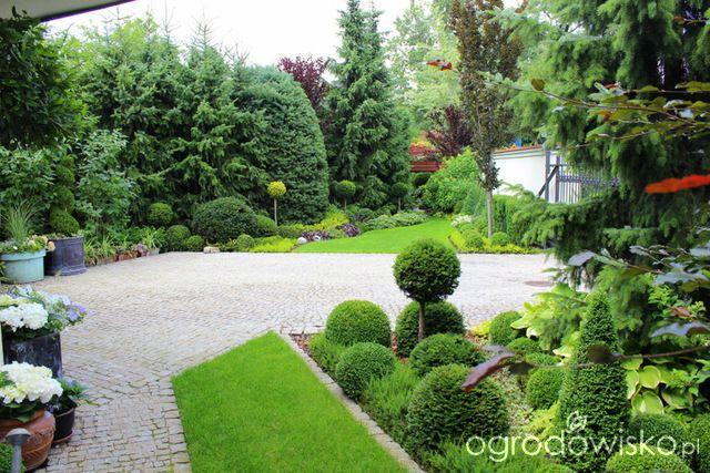 Ogród nie tylko bukszpanowy - część II - strona 2335 - Forum ogrodnicze - Ogrodowisko