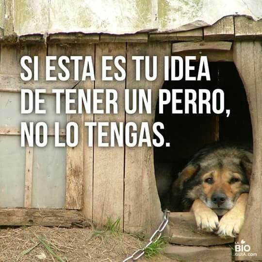 Perro. Si esta es tu idea de tener un perro ...no tengas porfavor. Maltrato animal.